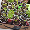 Starter plants at Seeds for Feeding Yourself